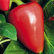 Pimento sweet pepper seeds