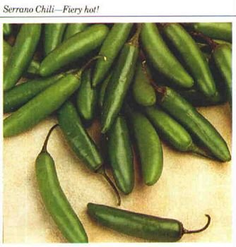 SERRANO HOT CHILE PEPPER SEED SEEDS