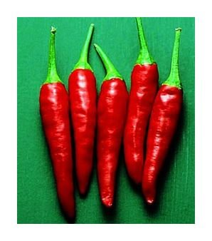 Tall Tai hot pepper seeds