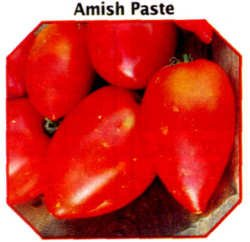 Amish Paste heirloom roma tomato seeds