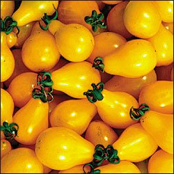 Beam's Yellow Pear, heirloom tomato seeds