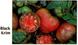 Black Krim, Russiam heirloom tomato seeds
