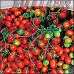 Cherry Roma seeds, tiny heirloom grape tomato