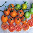 Jaune Flammee heirloom tomato seeds