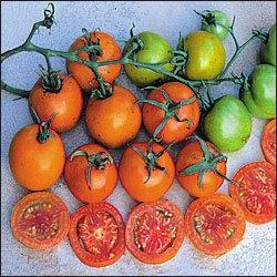 Jaune Flammee heirloom tomato seeds