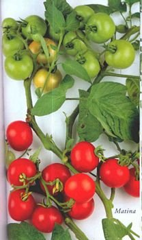 Matina tomato seeds, German heirloom