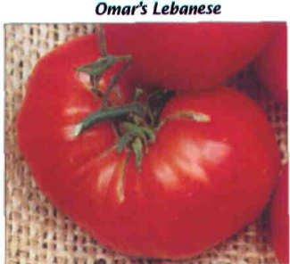 Omar's Lebanese tomato seeds, huge pink
