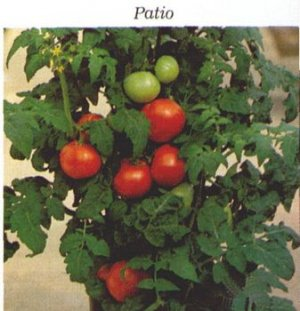 Patio Tomato Seeds Dwarf Plant