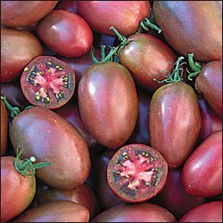 Purple Russian roma tomato seeds, heirloom