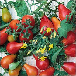 Red Fig tomato seeds, heirloom pear