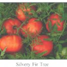 Silvery Fir Tree tomato seeds