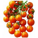 Sun Sugar F-3 tomato seeds, early gold cherry