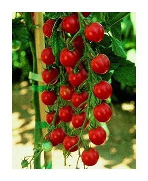 Sweet Million cherry tomato seeds
