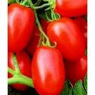 Viva Italia roma tomato seeds