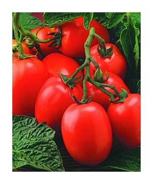 Window Box Roma tomato seeds