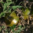 Brad's Black Heart great tasting black oxheart tomato seeds