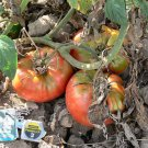 Pruden's Purple heirloom  tomato seeds
