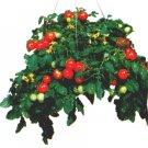 Basket King tomato seeds