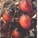 Saljut heirloom plum / grape type  tomato seeds