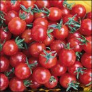 Currant Sweet Pea heirloom tomato seeds