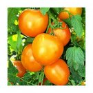 Golden Queen heirloom tomato seeds