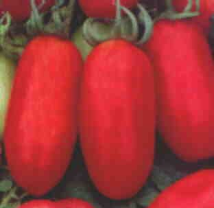 Heinz 2653 heirloom roma tomato seeds