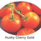 Husky Cherry Gold dwarf plants tomato seeds