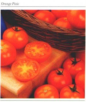 Orange Pixie dwarf plant tomato seeds