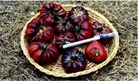 Purple Calabash heirloom tomato seeds