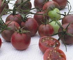 Chocolate Cherry  tomato seeds