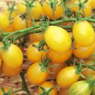 Cuban Yellow Grape  tomato seeds