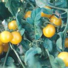Galinas yellow cherry tomato seeds