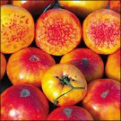Hillbilly Potato Leaf heirloom tomato seeds
