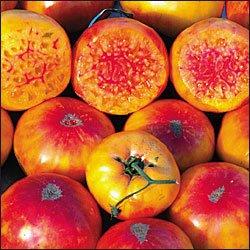Hillbilly Potato Leaf heirloom tomato seeds