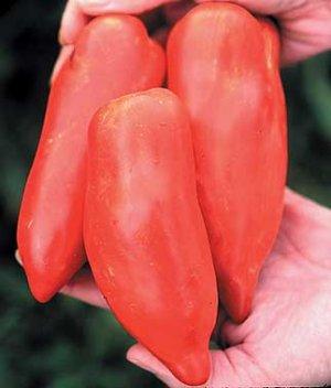 Howard German roma heirloom tomato seeds