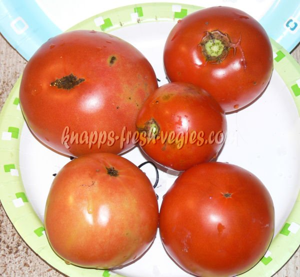 Novosadski Jabucar heirloom tomato seeds