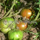 Harvard Square heirloom  tomato seeds