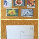 Assorted Garden Insects and Florals Postcards Set of 5 Handmade