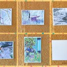 Assorted Animals and Wildlife Postcards Set of 5