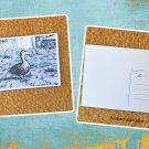 Female Mottled Duck Black and White Postcard