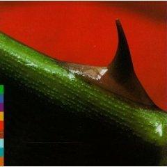 nusrat fateh ali khan & michael brook - night song CD 1996 real world - used mint
