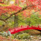 Japanese Garden with Red Bridge Abstract Artwork