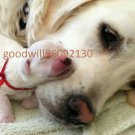PDF FILE Dog  and Puppy   Images  Photo made by myself