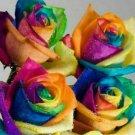 50Pcs Colorful Rainbow Rose Flower Seeds Home Garden Plants Multi-Color