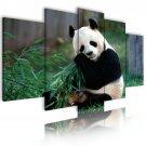 panda bear canvas wall art, framed wall art, bedroom wall art, gallery