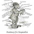 Anatomy of a Chupacabra