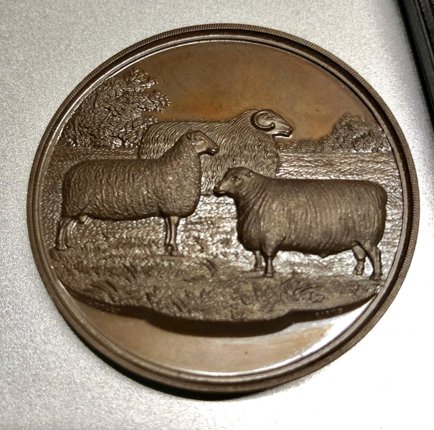Curtis & Horspool English Sheep Bronze  Coin in Box