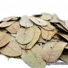 Guava Leaves 20g