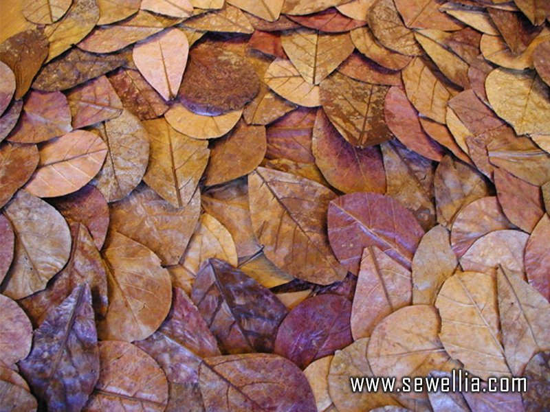 Indian Almond Leaves 100g