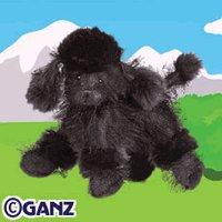 Webkinz Black Poodle